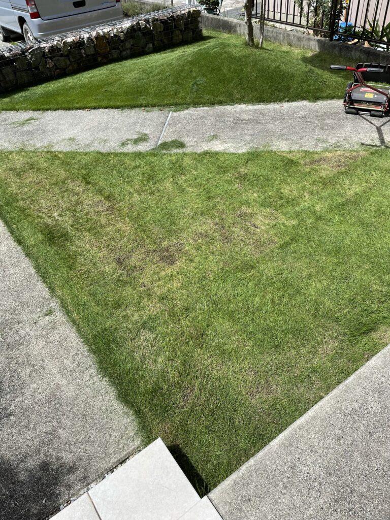 芝生の軸刈りからの回復の記録